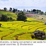 Cropland Expansion Increases Biodiversity Loss