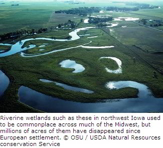 Iowa Wetlands