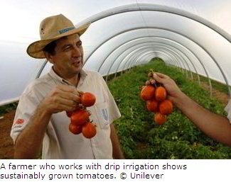 Sustainably Grown Tomatoes