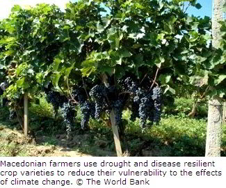 Using Resilient Crop Varieties in Macedonia