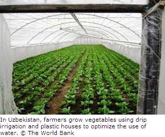 Drip Irrigation in Uzbekistan