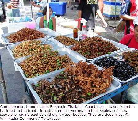 Insects Food Stall in Thailand
