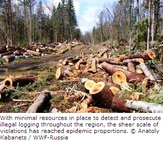 Illegal Logging in Russian Forests
