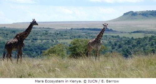Mara Ecosystem, Kenya
