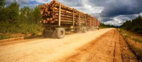 International Trade in Timber