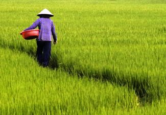 Agriculture in South East Asia