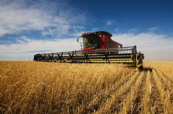Farming in U.K.