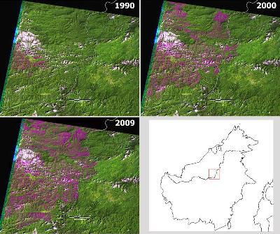Deforestation in Borneo, Malaysia