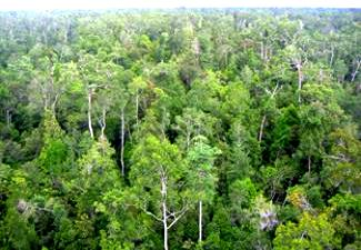 Tropical Forests in Borneo