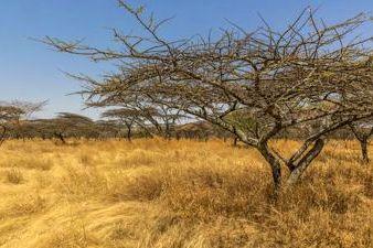 Savannas of Ethiopia