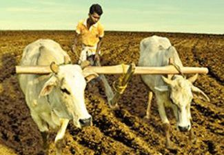 Small-scale Farmers
