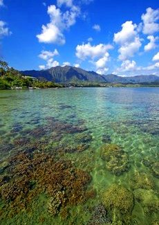 Coral Reefs in Hawaii