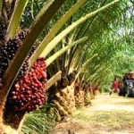 Sustainable Palm Oil: Marketing Ploy or True Commitment?