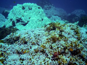 Coral Bleaching in Thailand in 2010