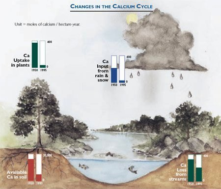 Calcium Cycle in Watersheds