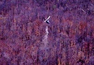 Restoring Acid Rain-Damaged Forests