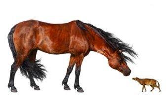 Illustration of Horses