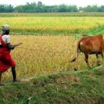New Report Offers Solutions to Close Global Food Gap