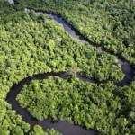 Global Community Puts Forests First with Milestone Decision on REDD+