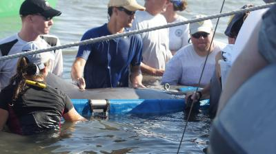 Barataria Bay Dolphins 2011 Health Assessment