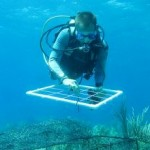 Study Shows Impact of Pollution on Coral Reefs, and Offers Solution
