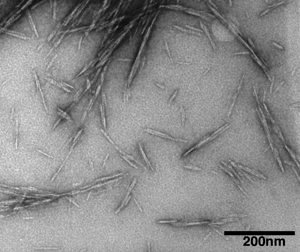 Cellulose Nanocrystals