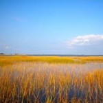 Humans Threaten Wetlands' Ability to Keep Pace with Sea Level Rise