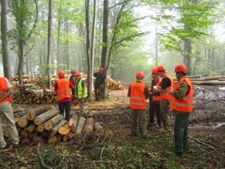 Responsible Forest Management