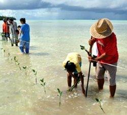 Planting Mangroves to Stop Coastal Erosion on Funafala Island, Tuvalu. © IPCC