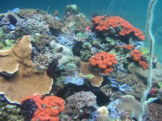 Coral Reefs in Palau