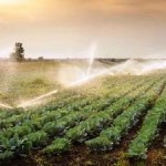 Global Food Trade can Alleviate Water Scarcity