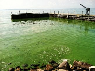 Algae Bloom in Lake Erie