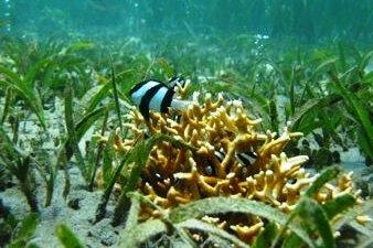 Fish and Ocean Acidification