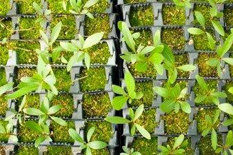 Plants. © NAU IDEA Lab