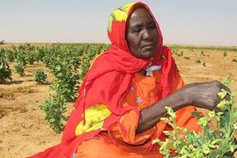 Conflict Affected People in Darfur