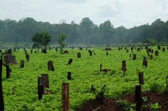 Soy Farm