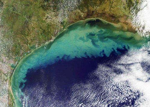 Dead Zone in Gulf of Mexico