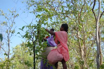 Tribal Women in India's Forests