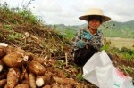t2s-grain-vietnam-small-farmers