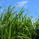 Winning Solution for Biofuels, Climate, and Biodiversity