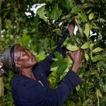 Strengthening Community Forest Rights Critical to Fight Climate Change