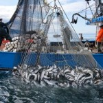 Alaska Fisheries and Communities at Risk from Ocean Acidification