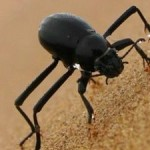 Beetle Biomimicry: Quenching World's Water and Energy Crises