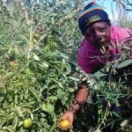 Investment in Climate Change Adaptation can Promote Livelihoods of 65% Africans