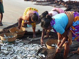 Fish Catch in India