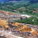 Illegal Land Clearing for Commercial Agriculture Responsible for Half of Tropical Deforestation