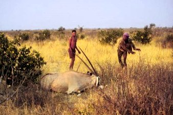 Kalahari Bushmen Hunting for Food in Botswana