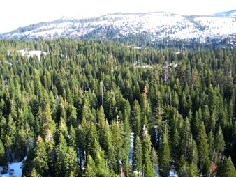Sierra Nevada Mountain Forests