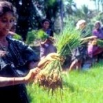 Putting Family Farmers First to Achieve Food Security, Eradicate Hunger