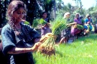 Smallholder Farmers in India